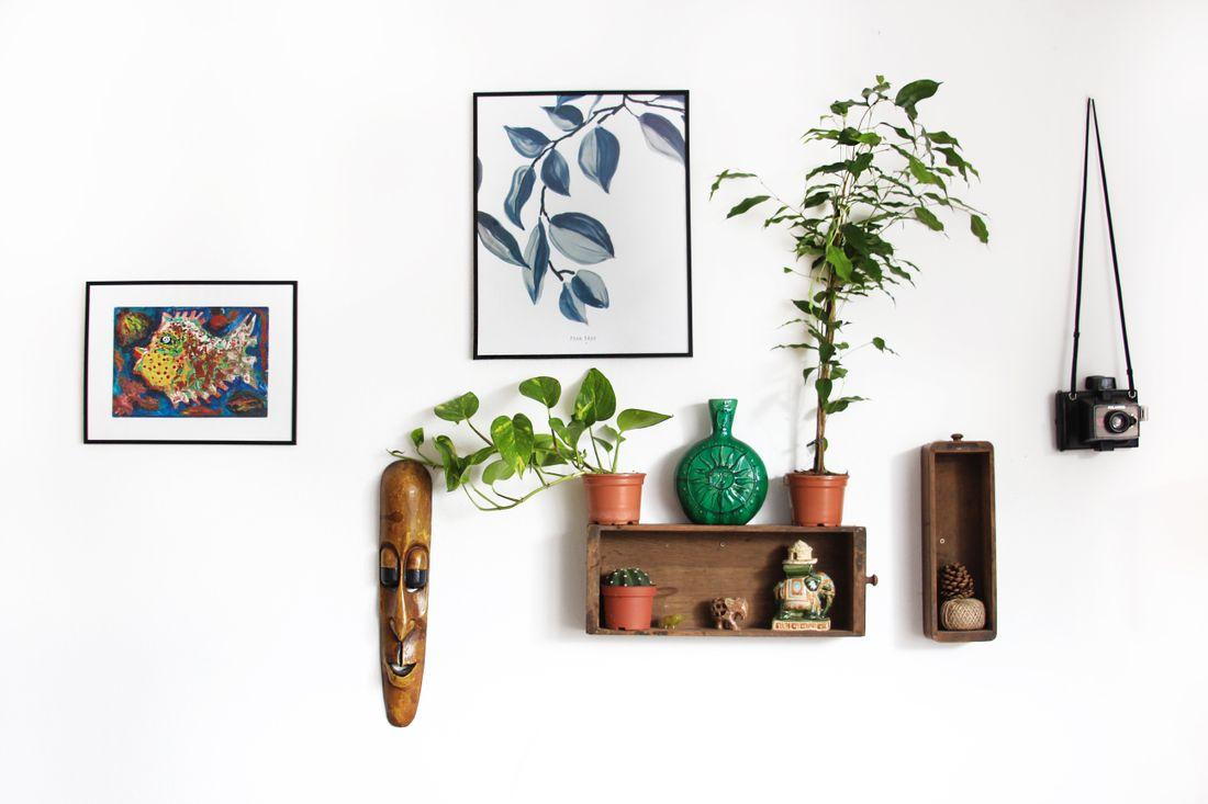 scegli le piante per il tuo appartamento